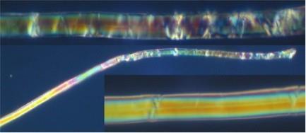 Fibra di lino al microscopio