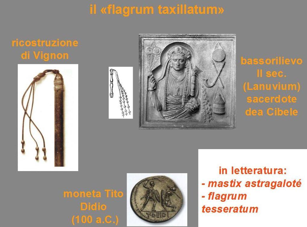 Flagrum taxillatum