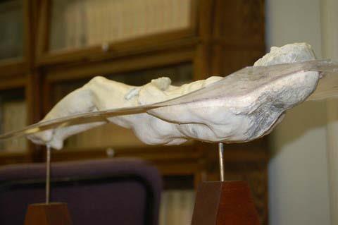 Modellino del corpo sindonico - visione dorsale